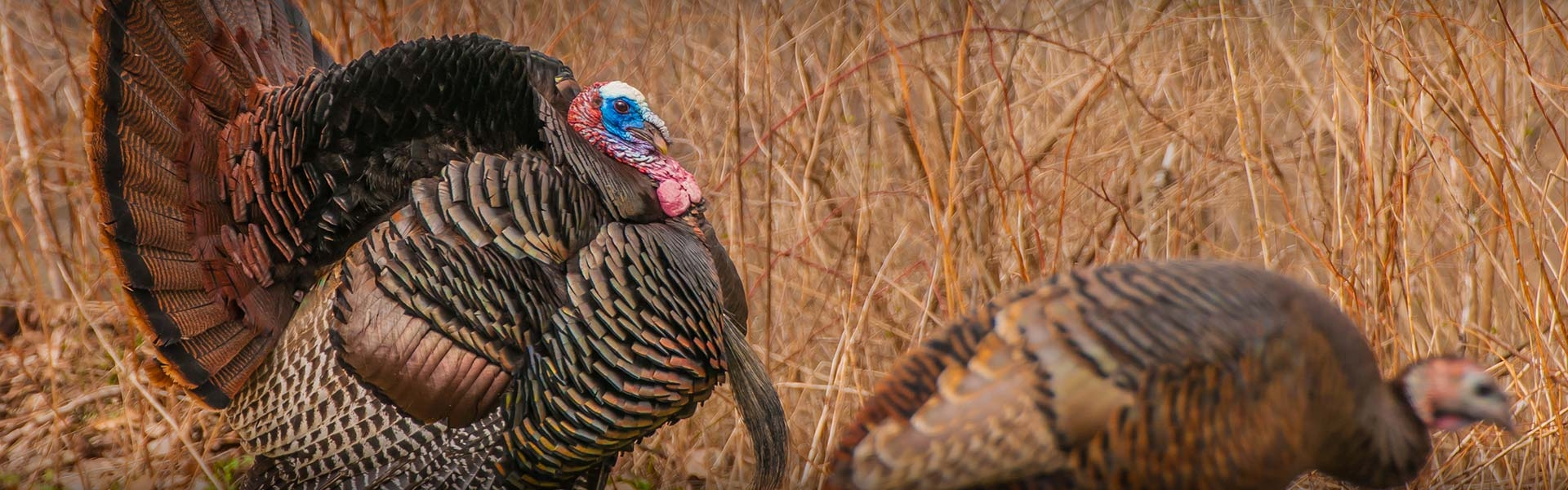 Eastern Colorado Turkey Hunts & Western Nebraska