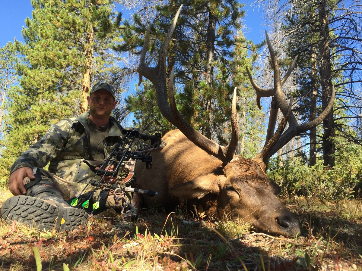 Archery Elk Hunts Colorado