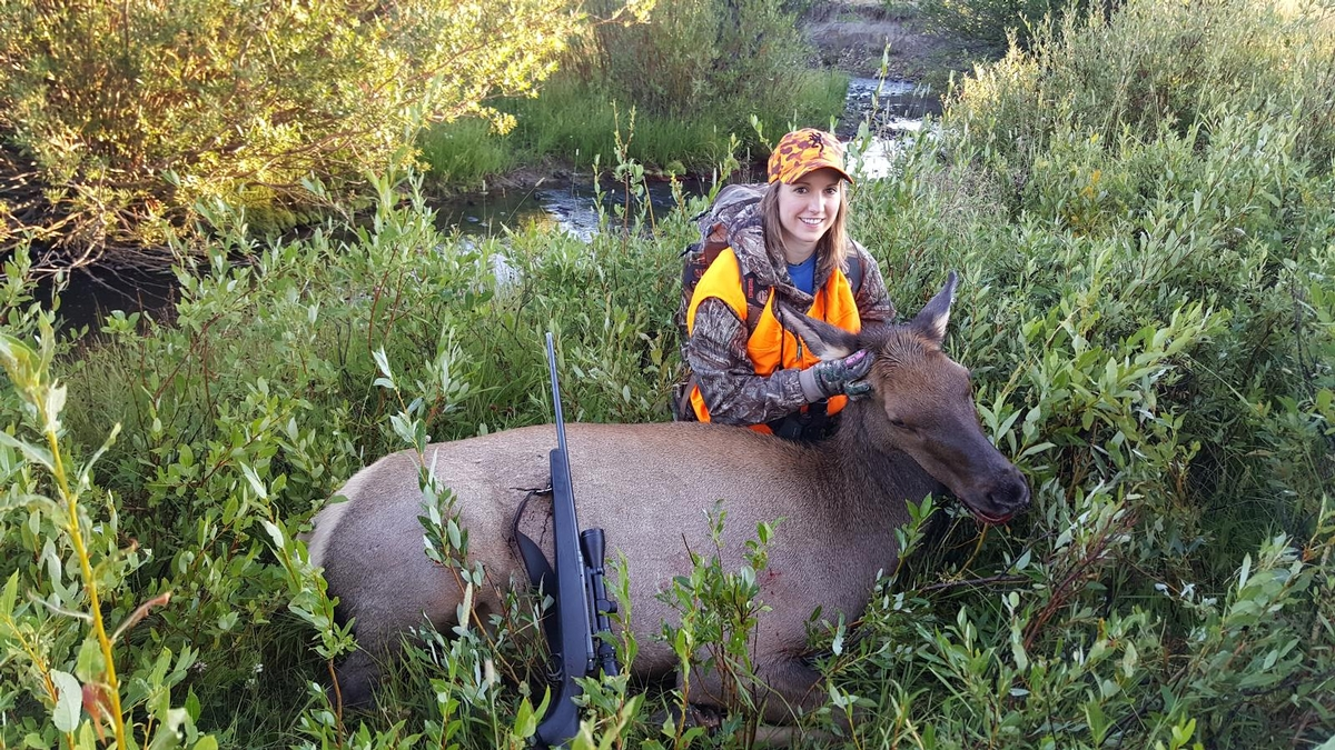 Cow Elk Hunt Colorado Private Land