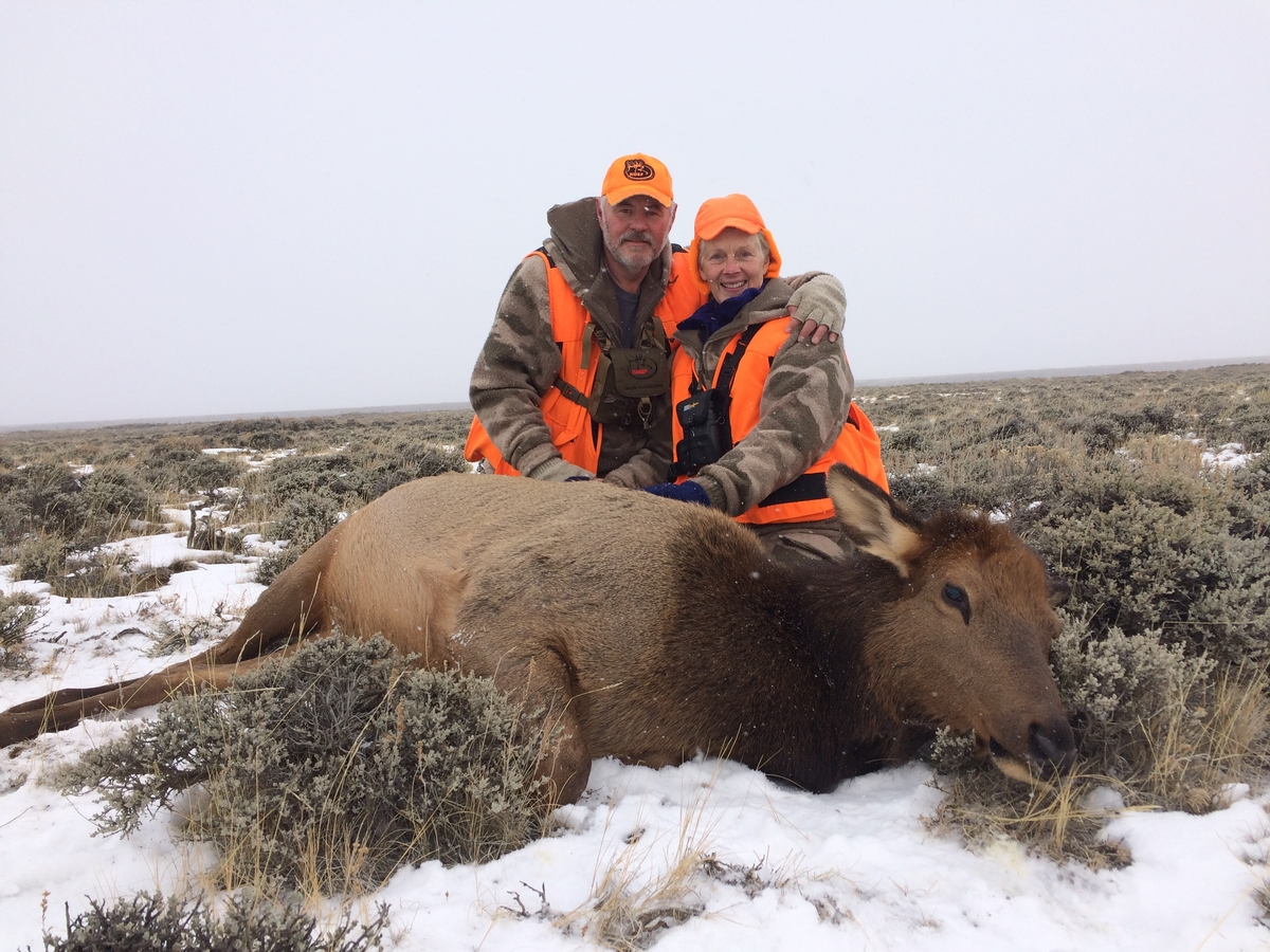 Guided Cow Elk Hunt Colorado